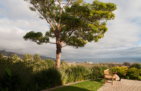 Trees and Scenery - Pepperdine University