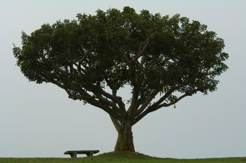 Alumni Park single tree, bench