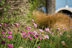 Flowers - Pepperdine University